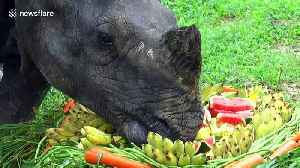 Rhinoceros enjoys cake made of fruit and vegetables on World Rhino Day in Thai zoo [Video]