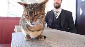 MEOW-VING UP THE RANKS: BELOVED TRAIN CAT PAUL BAGS 'CHIEF OF CUSTOMER RELATIONS' TITLE AFTER 10 YEARS OF CHARMING STAFF AND [Video]