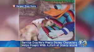 News video: Service Dog Nala Cuddles With Disney Characters In Heartwarming Video