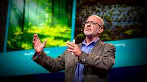 Can seaweed help curb global warming? | Tim Flannery [Video]
