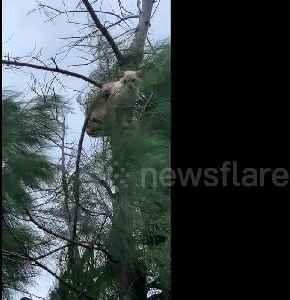 News video: 'Why are you up there?' Cat clings onto tree as Typhoon Tapah hits Japan