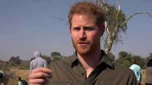 Prince Harry: We're losing the race against climate change [Video]