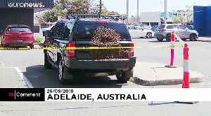 Swarm of bees creates a buzz in an Adelaide car park [Video]