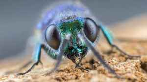 Photographer Finds Solace in Up Close and Personal Insect Shots [Video]
