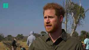 Prince Harry: 'How Can Anyone Deny Climate Change?' [Video]