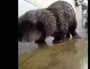 """We have each """"otter"""" - triple fun for rescued sea otters [Video]"""