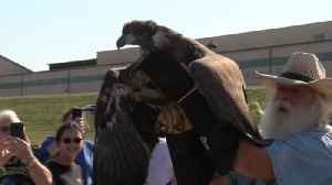 Betsy Ross, the once starving bald eagle, nursed back to health and released in Knox County [Video]