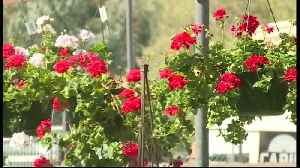 Alladin Nursery in Watsonville celebrates 100 years [Video]