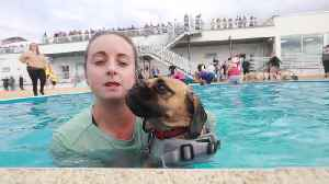 Dogs and their owners splash around together in open-air swimming pool [Video]