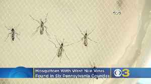 Mosquitoes With West Nile Virus Found In 6 Pennsylvania Counties [Video]