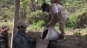 Peruvian coffee farmers are abandoning the bean as climate change strikes [Video]
