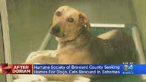 Humane Society Of Broward Seeking Forever Homes For Dogs, Cats Rescued In Bahamas [Video]