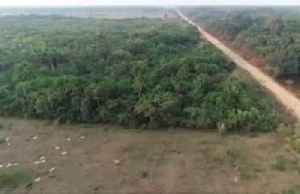Bolsonaro-backed highway targets heart of Amazon [Video]