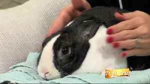 Getting to Know Bunny Rabbit [Video]
