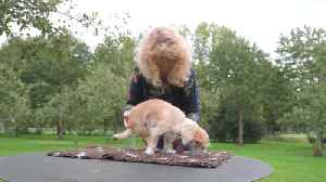 Woman dubbed 'miracle worker' after getting paralysed pooches walking again [Video]