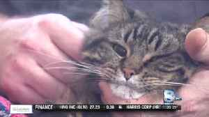Cat saves family from carbon monoxide [Video]