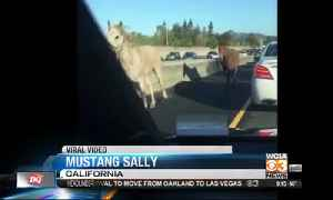 Trending topics and viral horse [Video]