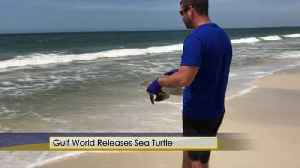 Gulf World Sea Turtle [Video]