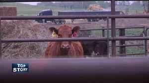 China Beef Markets [Video]