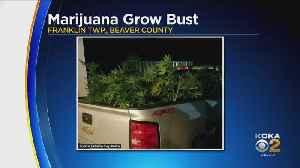 2 Men Arrested In Large Beaver Co. Marijuana Growing Operation [Video]