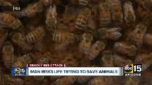 San Tan Valley man recalls scary moments trying to save dogs from swarm of bees [Video]