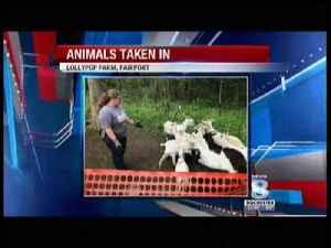 Lollypop Farm receives 27 goats [Video]