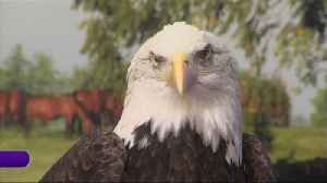 Raptor Rehabilitation of Kentucky [Video]