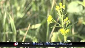 Dozens go on cover crop tour [Video]