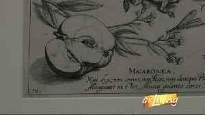 Krannert Art Museum Exhibit [Video]