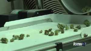 Yakima Co. Pot Ban Continues [Video]