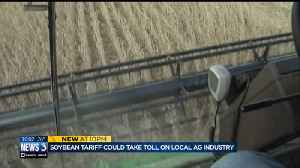 Soybean tariff could hurt already fragile local ag industry [Video]