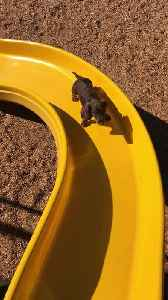 Little Legs Work Hard to Climb Slide [Video]