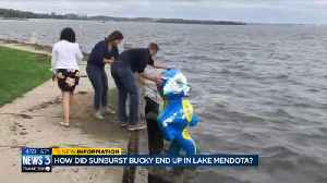 'Bucky took a dive for cancer': Sunburst Bucky artist reacts to statue found in water [Video]