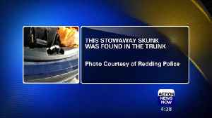 Redding Police Officer Finds A Skunk in the Trunk! [Video]