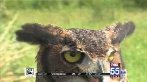 Going Green: Soarin Hawk Raptor Rescue [Video]