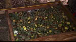 Family Worried Peyote Bust May Affect Business [Video]