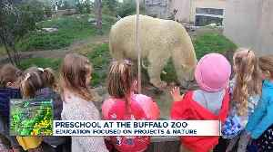 Your child could go to preschool at the Buffalo zoo [Video]