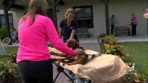 'Miracle' The Dog Rescued From Hurricane Dorian Debris In Bahamas [Video]