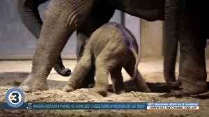 Newshounds Now: Baby elephant walks [Video]