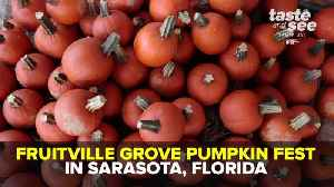 Enjoy your favorite fall activities at the Fruitville Grove Pumpkin Festival | Taste and See Tampa Bay [Video]