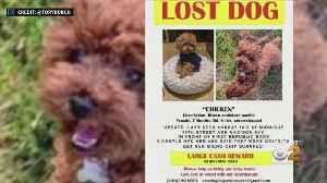Designer Tory Burch Appealing For Return Of Lost Dog [Video]