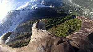 Chamonix: Victor the eagle, witness of climate change [Video]