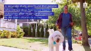 Owning a Dog May Lower Risk of Early Death [Video]
