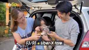 Uber Launches 'UberPets', So Your Pet Can Ride, Too! [Video]