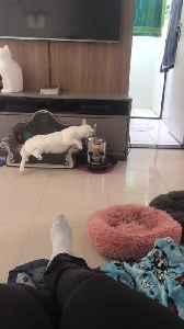 Cat Living its Best Life [Video]