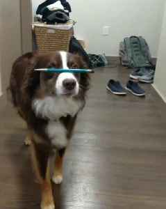 Dog flawlessly balances pen on nose while walking [Video]