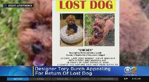 Tory Burch Trying To Track Down Lost Dog [Video]
