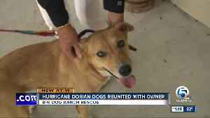 Hurricane Dorian Dogs Reunited with Owner [Video]