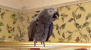 Could this parrot be the White House Whistleblower? [Video]