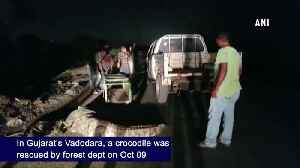 Forest department rescues crocodile in Gujarat Vadodara [Video]
